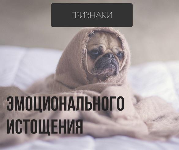 """Надпись """"эмоциональное истощение"""" на фоне собаки"""