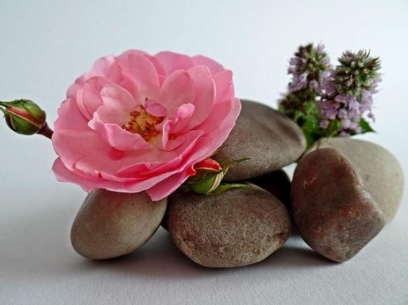 Цветок, камни