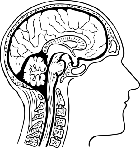 Картинка головы человека