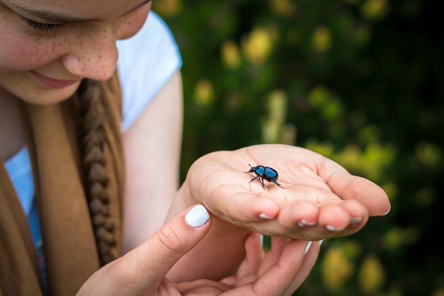 Фобия насекомых (энтомофобия): определение и лечение